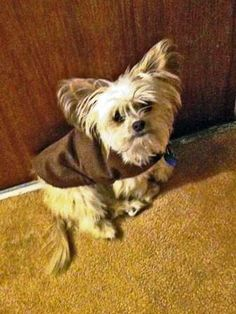 Warm and Cozy Doggy Jacket made Simple and Cheap!