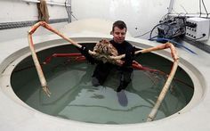 Animals That You Didn't Know Exist – Japanese Spider Crab   I need me some butter and a big ole pot of boiling water!