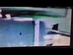 Bush killed JFK.  See the 22 photos!!!  Paul Kangas for SF Board of Educ...