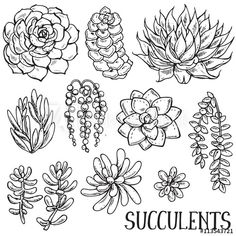 Ideas For Succulent Tattoo Outline Succulents Drawing, Cactus Drawing, Plant Drawing, Planting Succulents, Succulent Plants, Black Succulents, Felt Succulents, Succulent Wreath, Growing Succulents