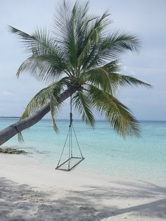 lime-smoothie:  my own picture. also from my maldive trip. xx