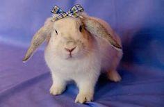 Lexy the bunny loves Exact Rainbow Diet