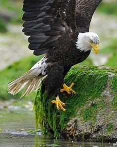 Native American Art - Eagle on rock
