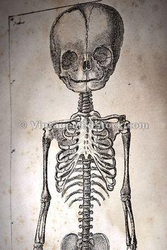skeletal fuck