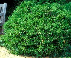 42 Best Evergreen Flower Beds Images Garden Shrubs 400 x 300