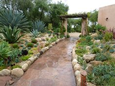 gardening south africa ideas - Google Search