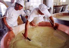 "Parmigiano Reggiano PDO ""Vacche Rosse / Red Cows"" seasoned 24/30 months 1 piece kg.1 http://bit.ly/1QQJMQr"