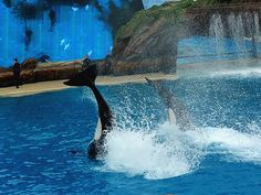 Sea World San Diego'