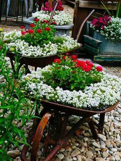 Las Carretillas con flores pueden ser un buena idea.  #Tips #Jardín #Decoración