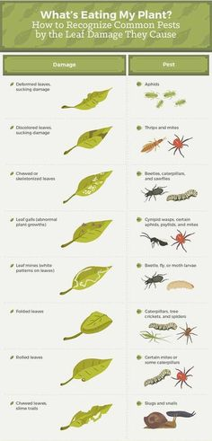 How to recognize common pests by the leaf damage they cause? #pestcontrol #dubai
