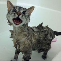 Meet Nala, the Most Famous Cat on Instagram - BlazePress