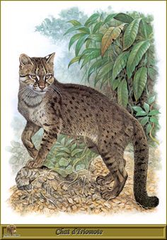 Роберт Даллет. Семейство Кошачьи   Painted Felines by Robert Dallet (152 работ) Small Wild Cats, Small Cat, Big Cats, Cats And Kittens, Zoo Art, Different Forms Of Art, All About Cats, Wildlife Art, Beautiful Cats