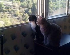 Lazy y Sigrid disfrutan juntas de las vistas y de este precioso día.