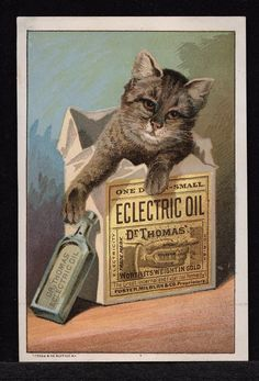Everyone loves cats, as this 19th century medical postcard shows. Advertisement for Dr. Thomas' Eclectric Oil depicting a gray cat with its head and front paws showing in an upright box of the medicine.