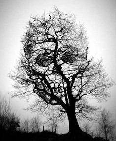 Skull tree.