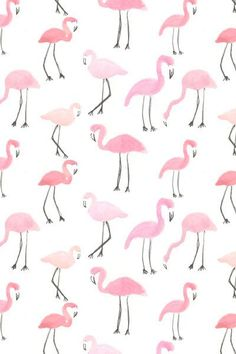 Abby Galloway - flamingos