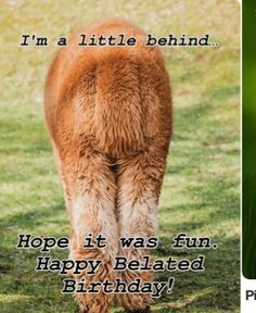 Anyone with a sense of humor will appreciate this silly belated birthday card! Featuring the hind quarters. Belated Birthday Quotes, Belated Birthday Greetings, Happy Late Birthday, Birthday Love, Birthday Greeting Cards, Birthday Memes, Birthday Posters, Birthday Pins, Happy Birthdays