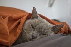 Suu is tired http://ift.tt/2m5NZsr