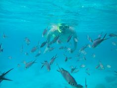 #Bonaire, a dreamy place to #snorkel with the #fish!