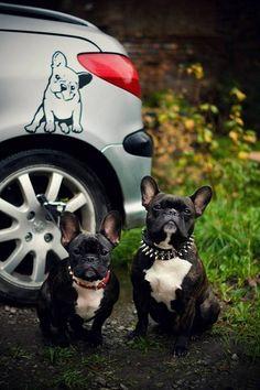 Naklejka ścienna Pies Buldog Francuski Smuteczek - Psiakrew - Naklejki na ścianę