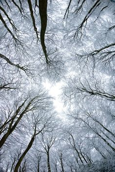 bare trees among winter frost                                                                                                                                                                                 Mais