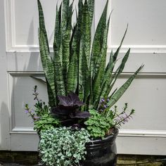 We specialize in garden containers. We grow some of our own unique plant materials and seek out unique plant combinations to create standout focal points for your home. Our designers source unique Succulents Garden, Garden Pots, Planting Flowers, House Plants Decor, Plant Decor, Container Plants, Container Gardening, Outdoor Plants, Outdoor Gardens
