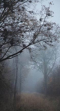 I'm that kind of fairy who lives in the deep forest, who plays with the fog.