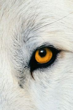 Wolf eye...beautiful