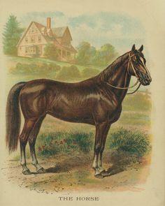 Animal printables http://3.bp.blogspot.com/-ofr_A2heb3M/UXMrQLoXmkI/AAAAAAAAWSg/WwxiYdy7jHE/s1600/Vintage-Horse-Drawing-w.jpg