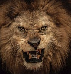 "The Bible warns: ""Keep your senses, be watchful."" Why? Because ""your adversary, the Devil, walks about like a roaring lion, seeking to devour someone."" (1 Peter 5:8)"