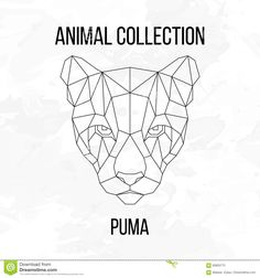 geometric-puma-head-animal-line-silhouette-white-background-vintage-design-element-69905773.jpg (1300×1390)