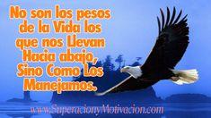 Imágenes de águilas con frases de reflexión | Descargar imágenes gratis