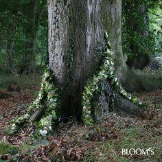 Baumstämme mit Ranken #rouwbloemen voor #natuurbegraafplaats