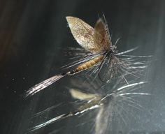Hollow Body Mayfly