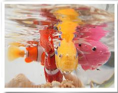 Electric flash swim fish magical music with light machine sensation fish swim pet clown fish Robo Fish, Fish Swimming, Electronic Toys, Cat Toys, Gadgets, Happy Birthday, Xmas, Kitty, Free Shipping