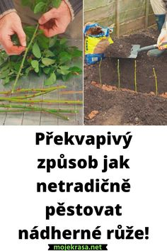 Pesto, Nature, Plants, Gardening, Naturaleza, Lawn And Garden, Plant, Nature Illustration, Off Grid