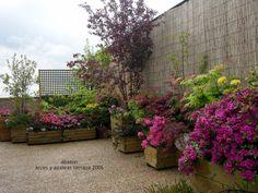 Arces y azaleas en mi terraza: Mis primeros acer palmatum y azaleas