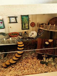 My hamster Charles Hamster Habitat, Hamster Life, Baby Hamster, Hamster House, Hamster Stuff, Ferret, Hamster Tank, Cool Hamster Cages, Mouse Cage
