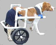 As dogs get elderly and arthritis or other hip challenges increase, a DIY dog wheelchair might help you extend your dog's life. This is a valuable resource with plans available via the link.
