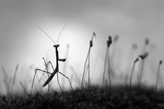 Nature Photography in Black and White - Tips and Examples