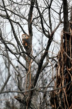 The Watcher by Jeka World Photography, via Flickr