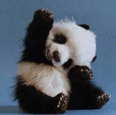 The cutest panda ever!