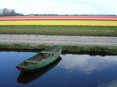 Row Boat and Tulip Fields - The Netherlands