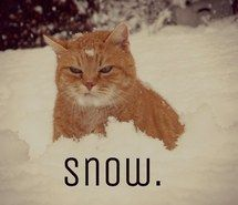 Inspiring image animal, cat, snow, winter #1502554 by aaron_s - Resolution 500x667px - Find the image to your taste