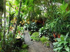 Image result for balinese garden