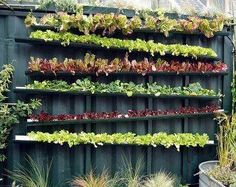 Want to grow a salad garden but have no room? Try gutters! Fit them to a fence, alternate sloped for drainage.