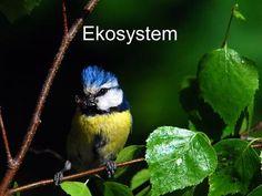 Ekosystem Ekosystem.>