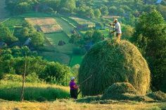 Rural workers, one standing on the top of a hay bale, at work in the fields of Breb, a village in Transylvanian region of Maramures, Romania