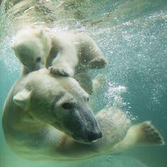 Polar family!
