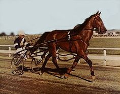 """Cardigan Bay, New Zealand's """"million dollar pacer"""", the first to win a million in the US; appeared on The Ed Sullivan Show - Google Search"""